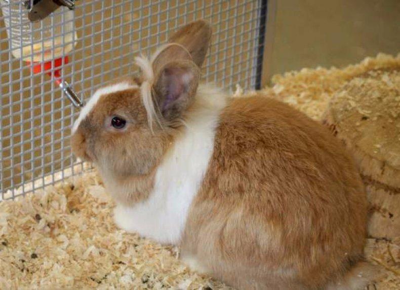 Кокцидиоз у кроликов: причины, симптомы, лечение, профилактика