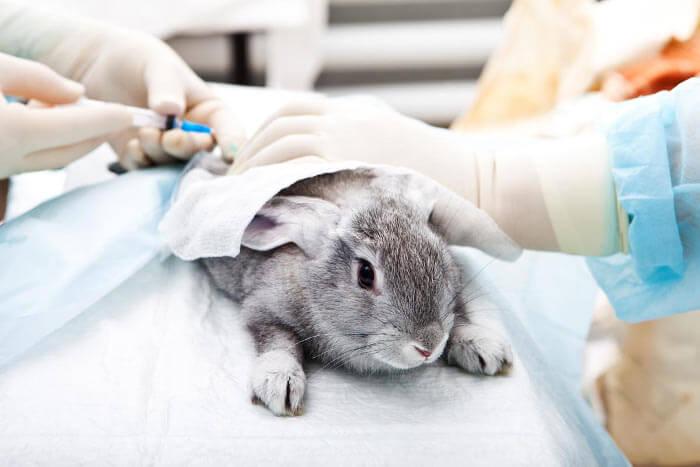 Кастрация кроликов своими руками