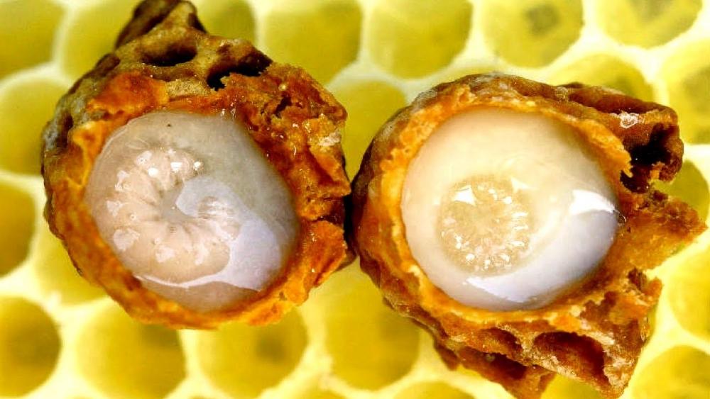 белый мед с маточным молочком