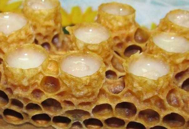 маточное молочко пчелиное полезные свойства