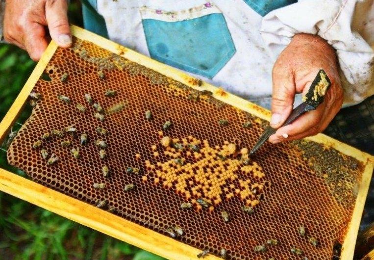 пчеловодство для начинающих с чего начать