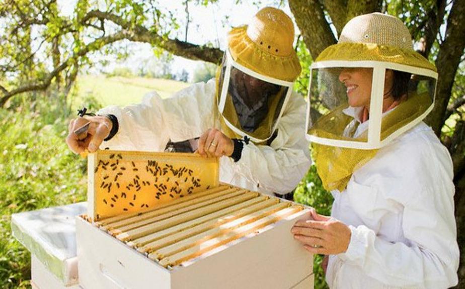 разводить пчел