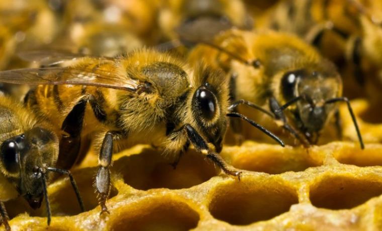 пчелы разведение и содержание