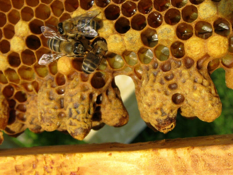 завести пчел с нуля