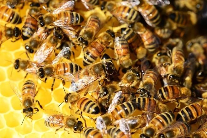 уход за пчелами для начинающих