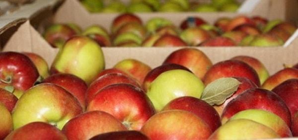 хранилище для яблок своими руками
