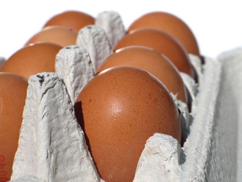 бизнес на куриных яйцах в домашних условиях