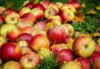 сорта яблок по алфавиту