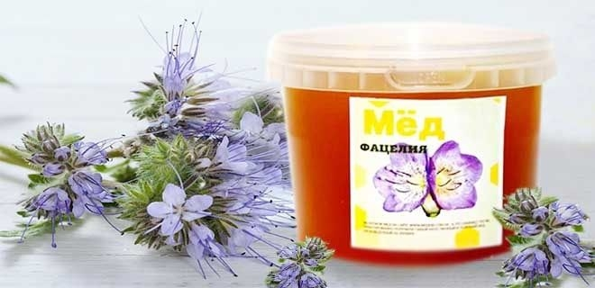 мед из фацелии полезные свойства