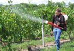 оработка винограда медным купоросом осенью