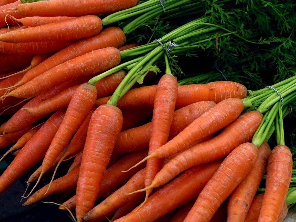 морковь самая сладкая и урожайная