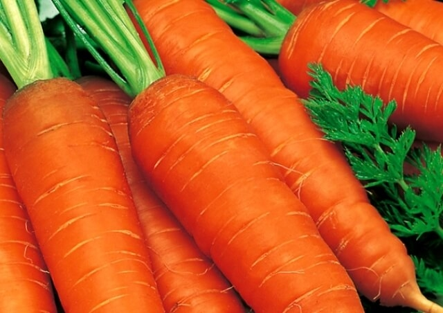 морковь каротель описание